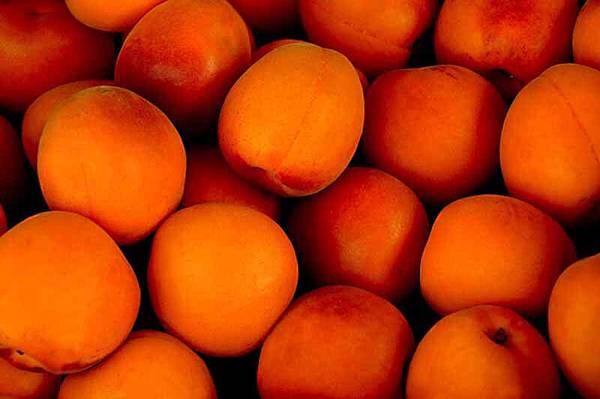 apricot-1556851_640.jpg