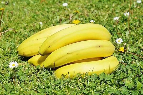 bananas-2290471_640.jpg
