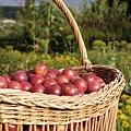 basket-1330087_640.jpg