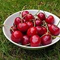 cherries-370909_640.jpg