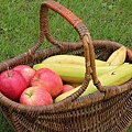 basket-2268218_640.jpg