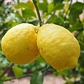 lemon-1117562_640.jpg
