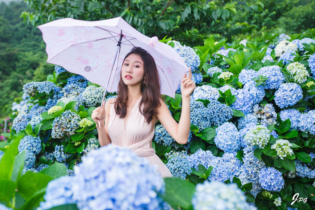 2019繡球花季!雲霧之間的繡球花就在陽明山-竹子湖花與樹繡球花園【丁小羽旅遊篇】