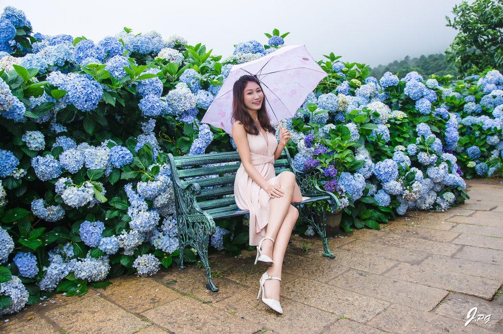 2020繡球花季!雲霧之間的繡球花就在陽明山-竹子湖花與樹繡球花園【丁小羽旅遊篇】
