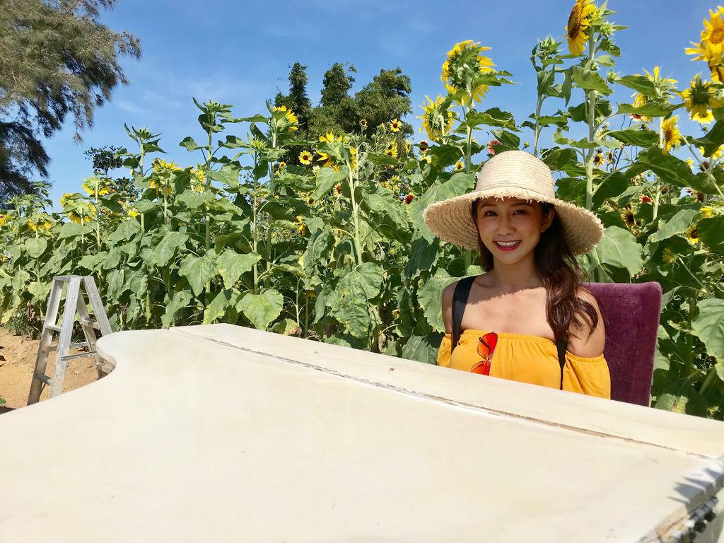 桃園景點-2020向日葵花季在向陽農場漫步在向日葵花海中