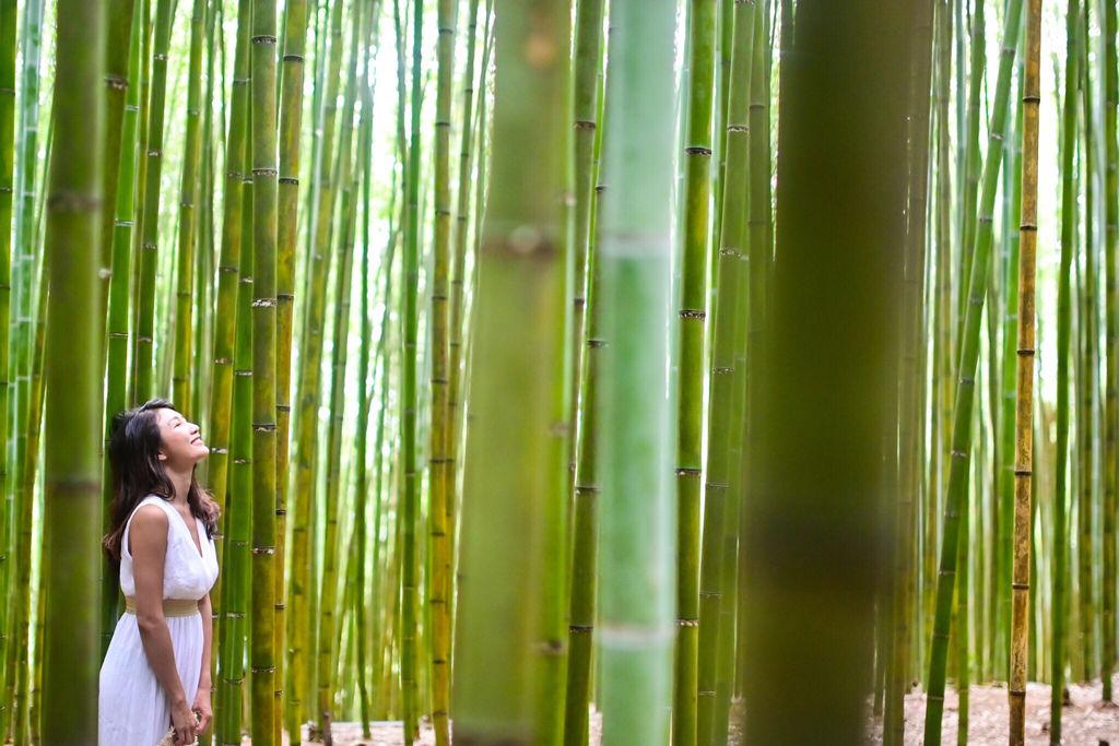苗栗景點-泰安烏嘎彥竹林-台灣版的京都嵐山竹林小徑【丁小羽旅遊篇】