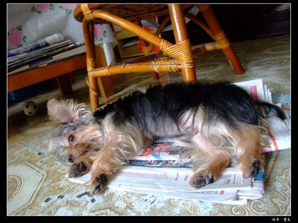 09.但我最想在報紙上睡覺