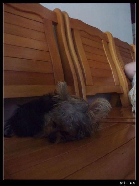 31.我是乖孩子,都坐在椅子上睡覺