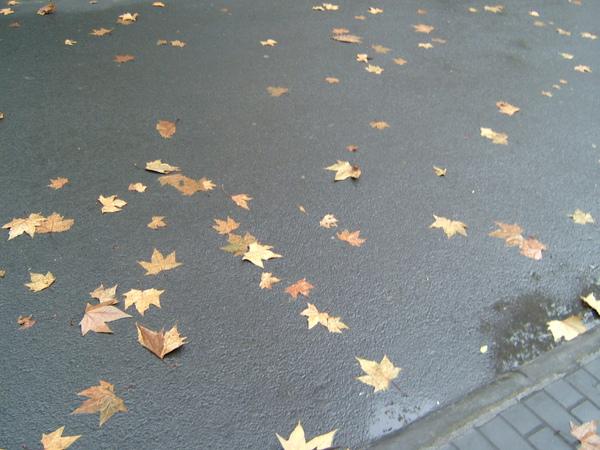 雨後的巨型落葉
