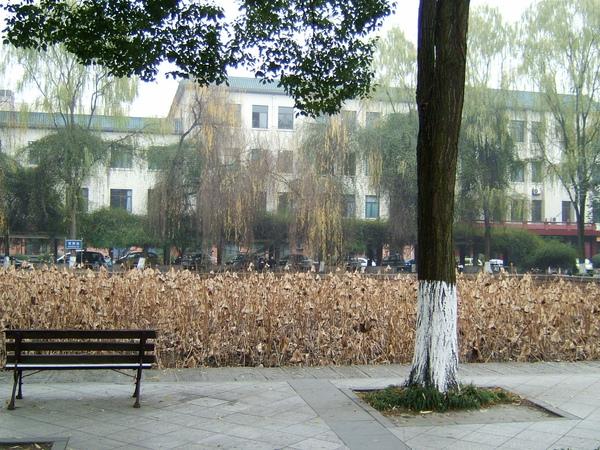 萬江校區的蓮花池