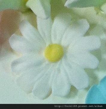 IMG_6827-雛菊.JPG