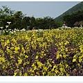 竹子湖海芋DSCF4158-20140406.JPG