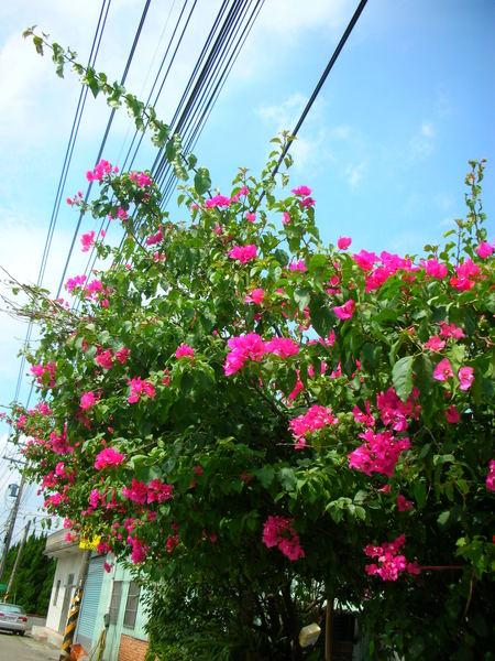 還有美麗的花作伴.JPG