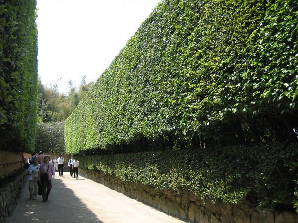 金閣寺入口處的綠蔭迴廊
