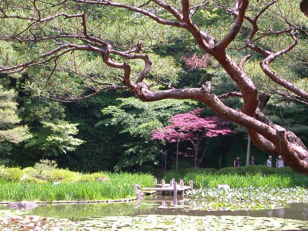 平安神宮裡的神泉苑一隅