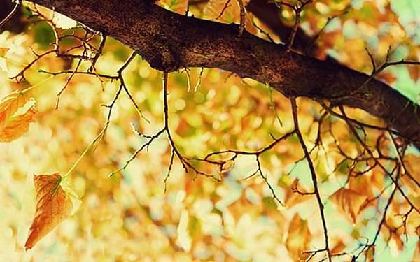 秋天低熱量食物介紹