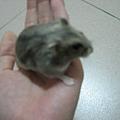 可愛小老鼠.jpg