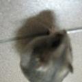 米老鼠喔.jpg