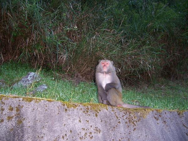 很自在的猴子