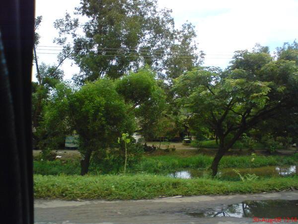 往勃固路上出現了一堆草屋, 結果我怎麼只拍到了一堆樹?!