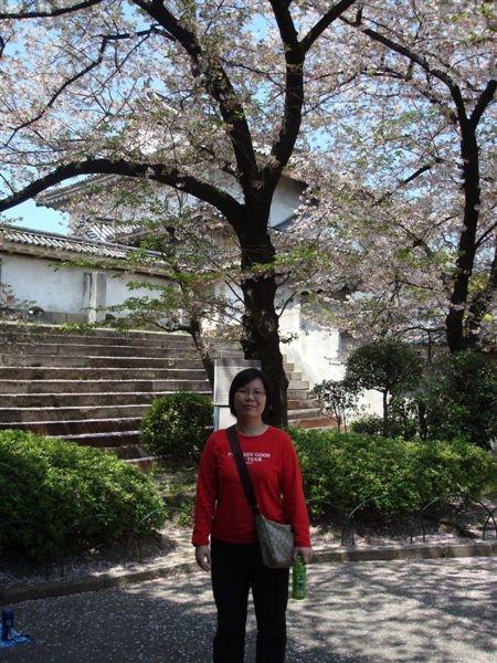 進了大阪城看到的第一棵櫻花嗎?
