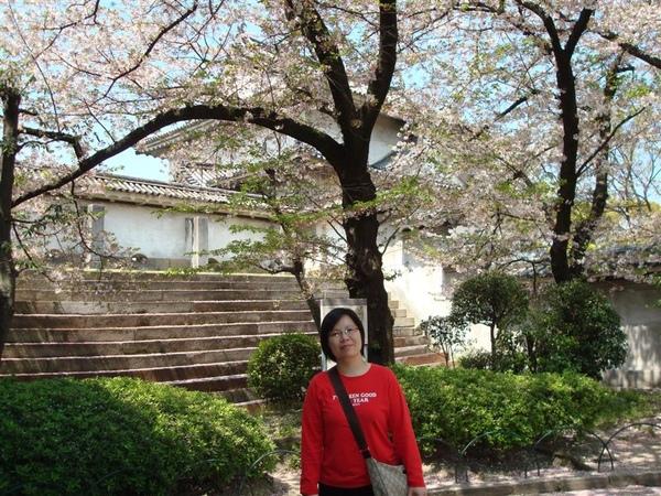 其實是因為櫻花樹好大一顆