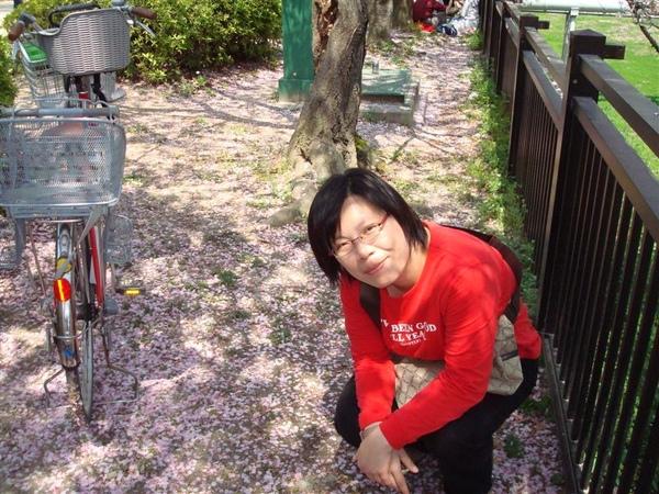 為什麼櫻花樹下有腳踏車!