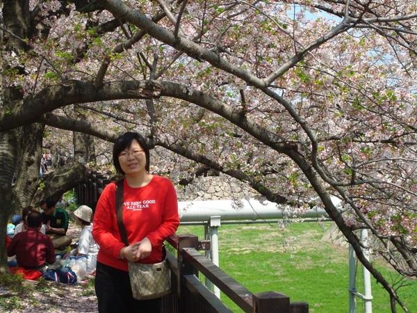 一直在櫻花樹下拍照...