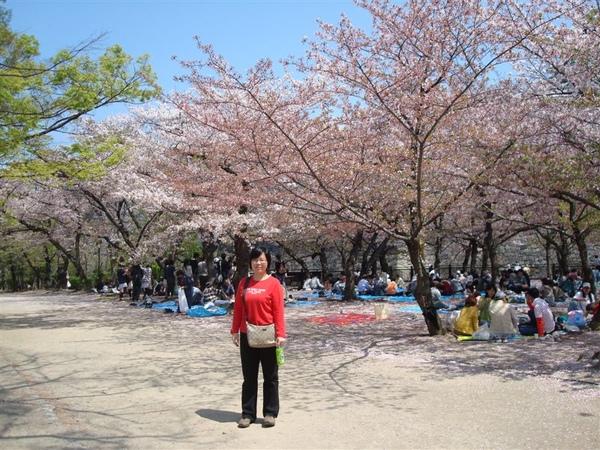 這樣大家才知道我有看到櫻花~