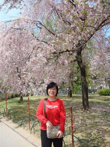 不知道第N次在櫻花樹下拍照了...
