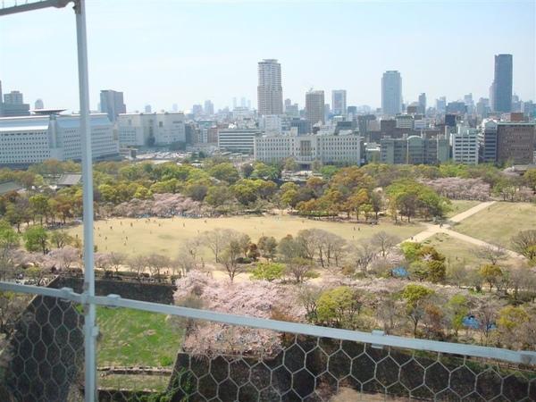 底下又是櫻花樹