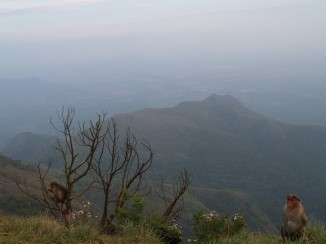 view29