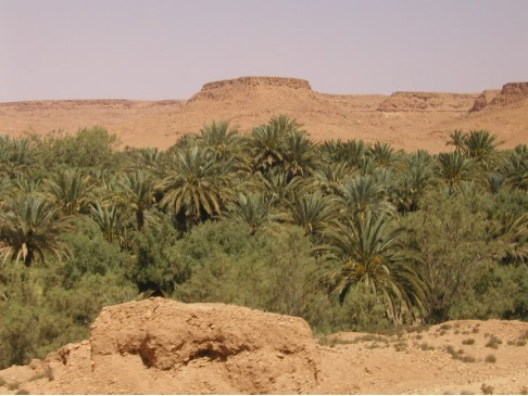 風景08-沙漠裡的綠洲.jpg