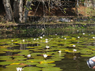 lotus02