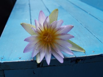 lotus08
