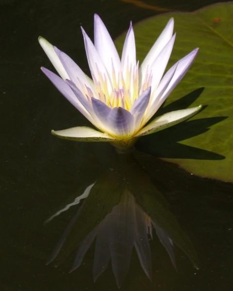 lotus03