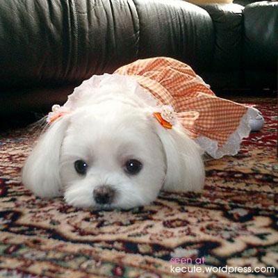 puppy-funny.jpg