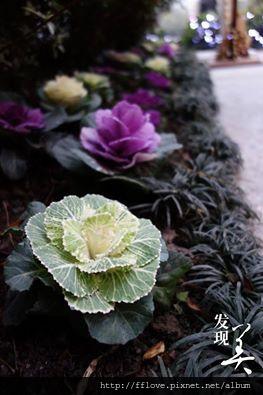 米堤飯店花卉.jpg