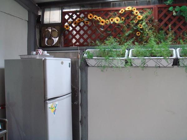 陽光透進廚房2