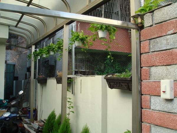 大門口進來看到的植物群