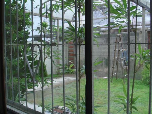 從一樓101號房看出去的唐竹及庭院景觀