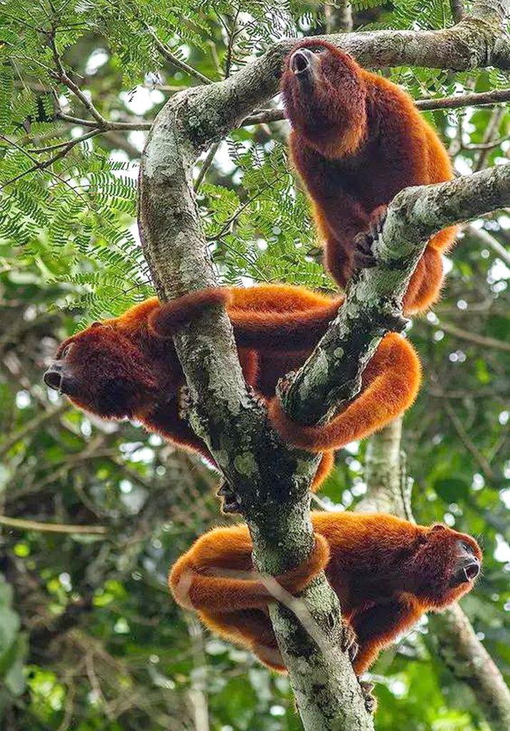 罕見猴子照片,大美!
