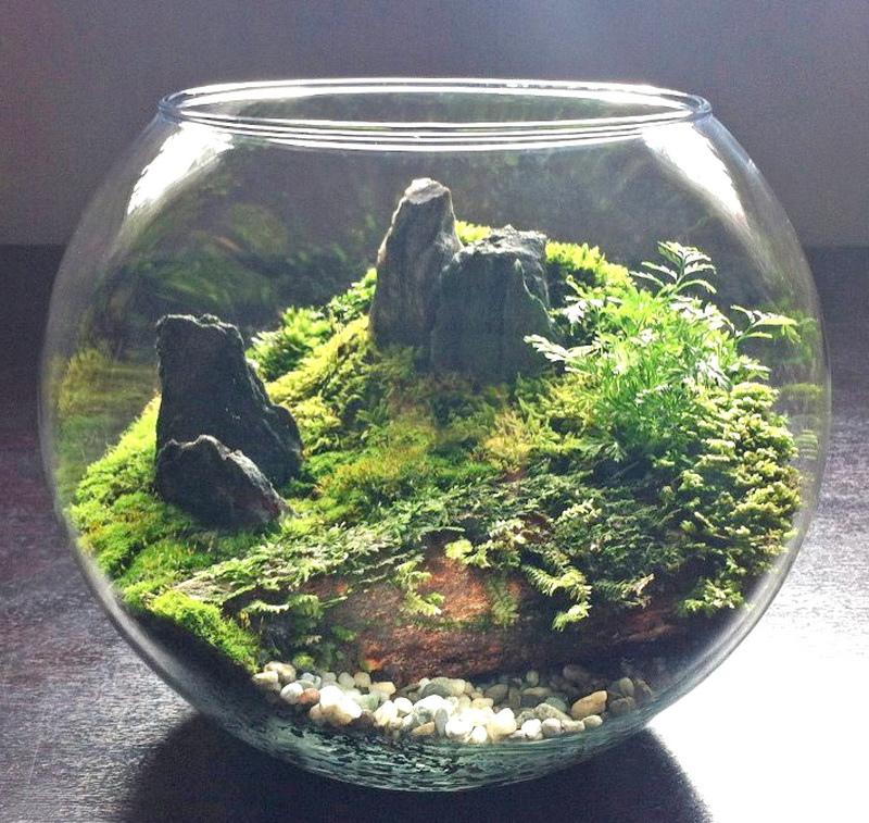 new terrarium 1 (1)