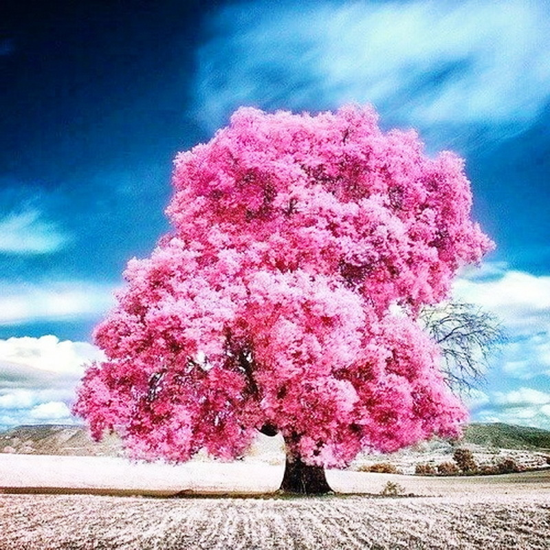 553fe38828ac253e658d7e40bad19311--pink-trees-cotton-candy.jpg