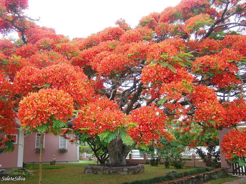 amazing-trees-15.jpg