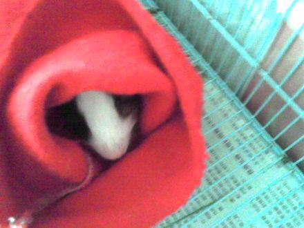 暖呼呼滴紅睡袋