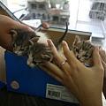 2009年8月8號三胞胎