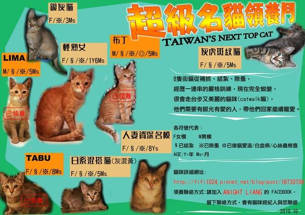 8 CATS.jpg