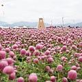2012新社花海4