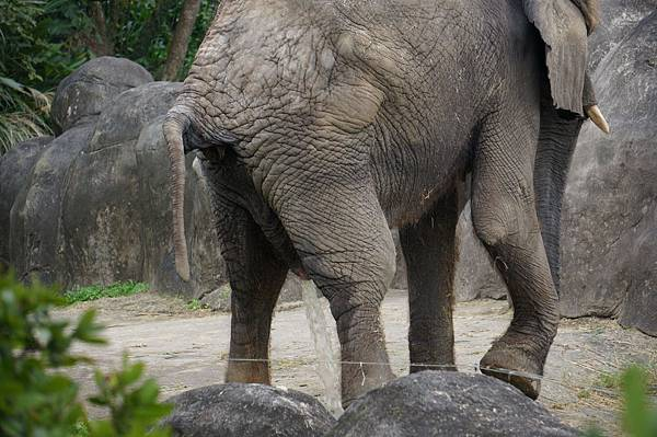 taipei zoo 19
